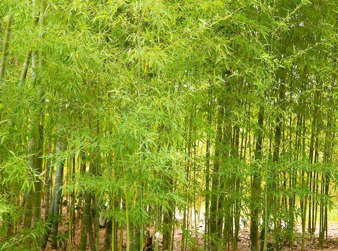 またから竹の子とらさるな